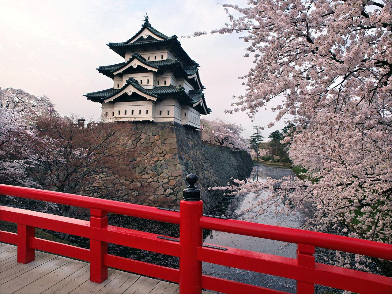 弘前 桜3